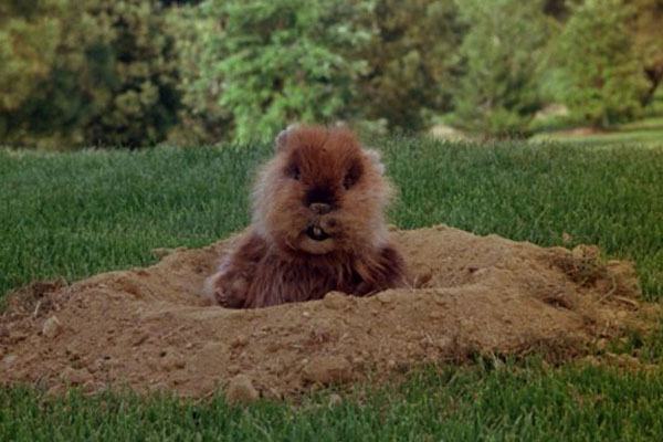 23. The Scenes With The Gopher Were Shot After Filming Was Over