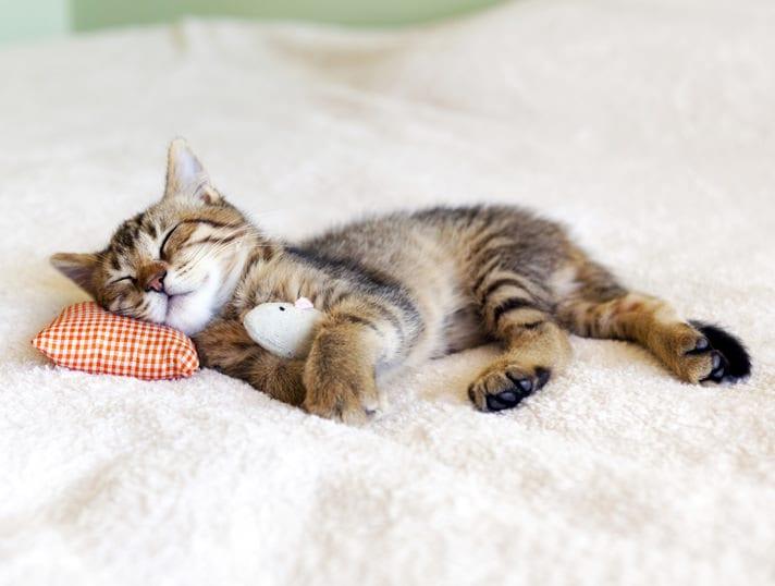 Sleeping A Lot