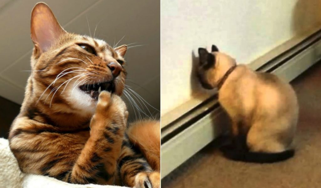 Different Cat Behaviors And Their Explanation