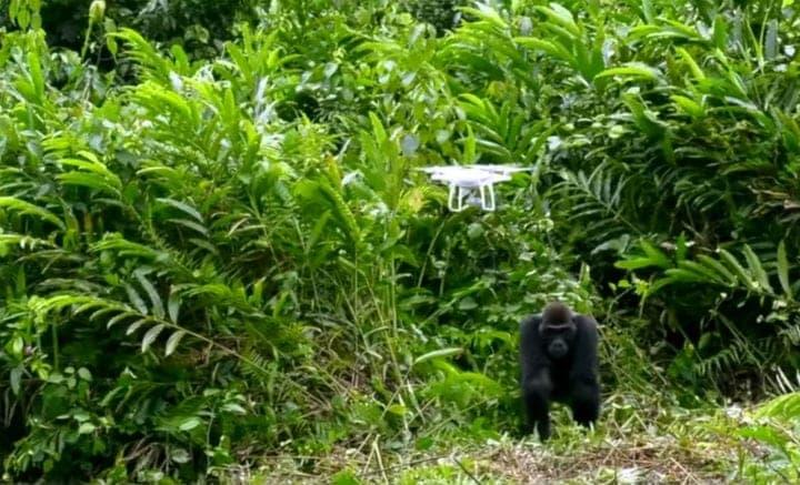Using Drones