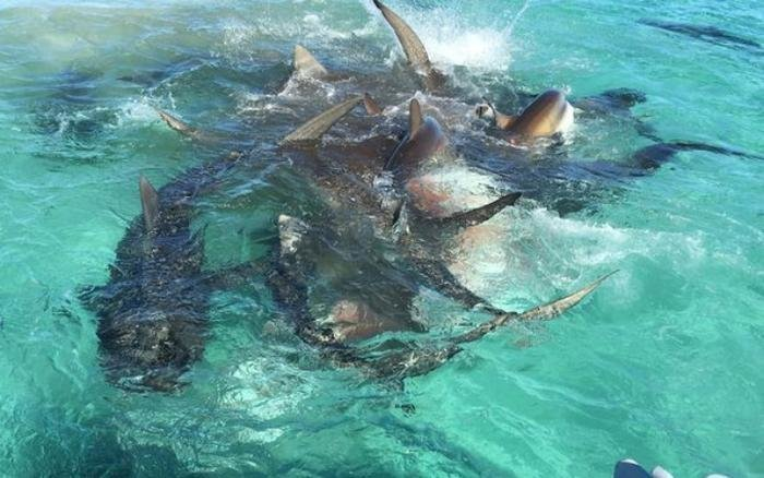 Buffet For Sharks