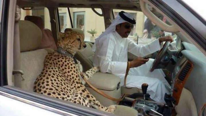 Exotic Pets As Status Symbols