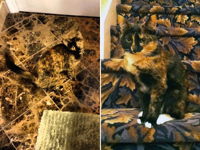 Camouflage Cats