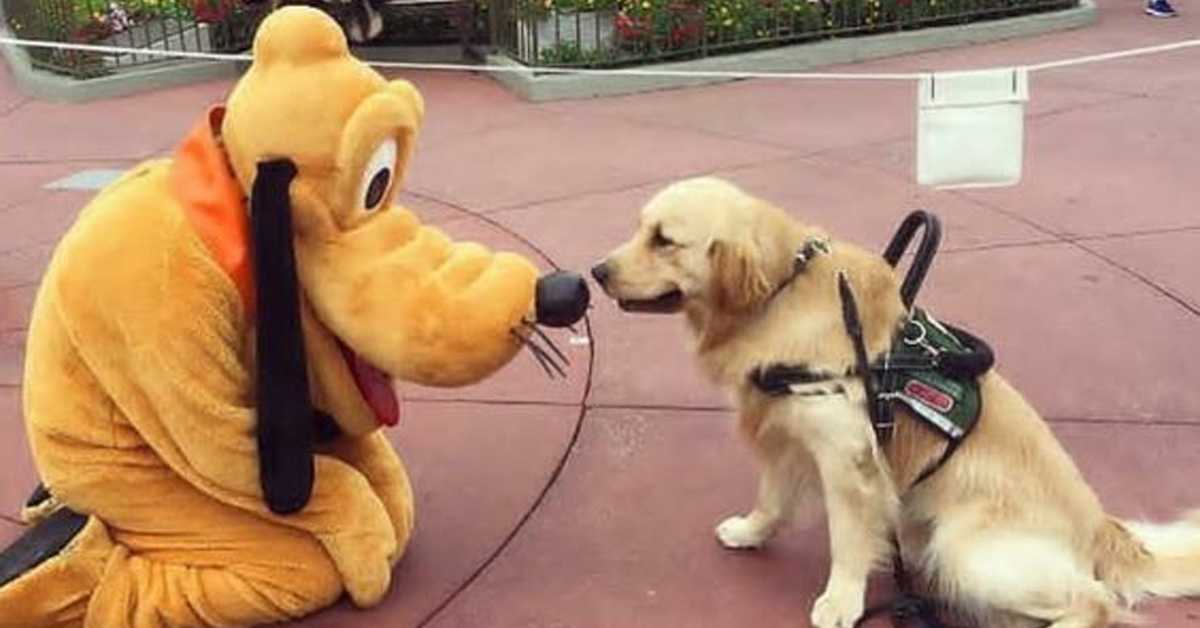 Pluto And His Pet Pal