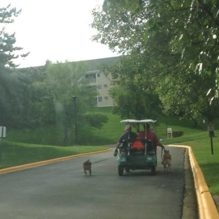 Taking The Dogs Out