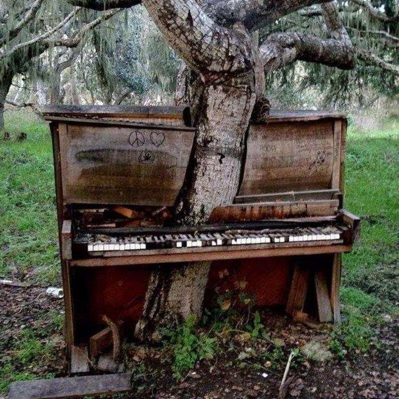 An Incredible Photo Of A Tree Growing Out Of A Piano