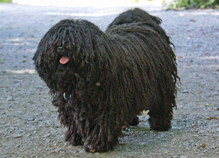 No Normal Dog