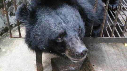 Little Black Is A Bear