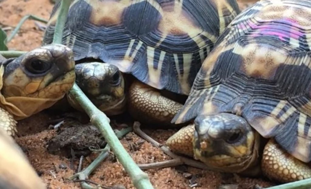 The Plan For The Tortoises