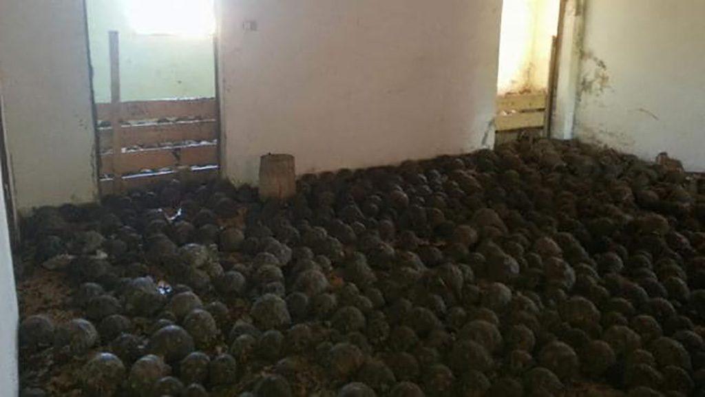 Tortoises Filled The Floor
