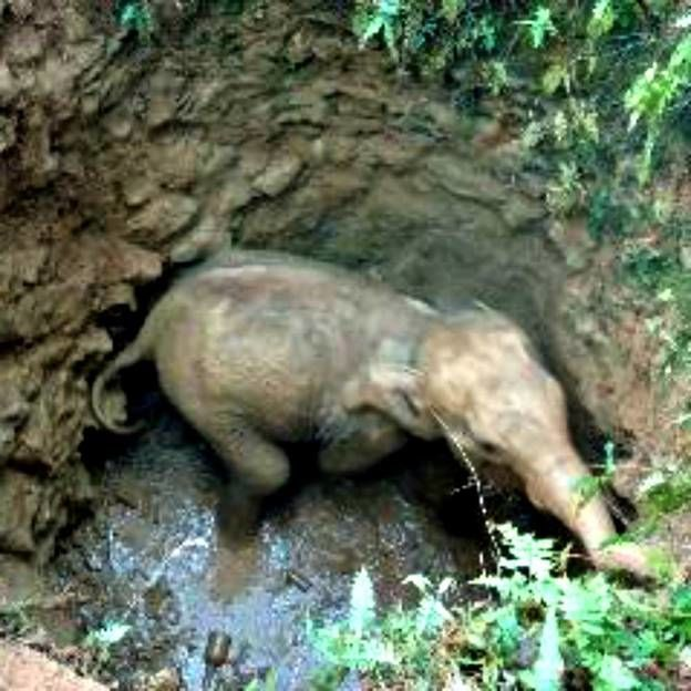 This Baby Elephant Had Been On The Brink Of Death When The Unexpected Happened