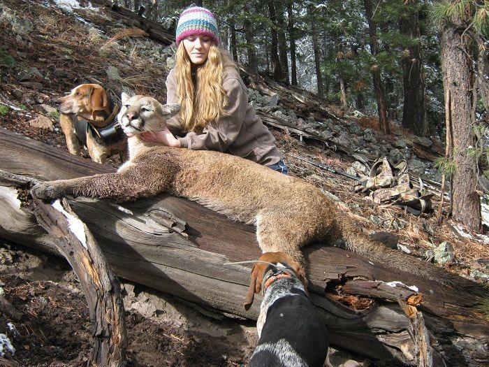Controlling Mountain Lions