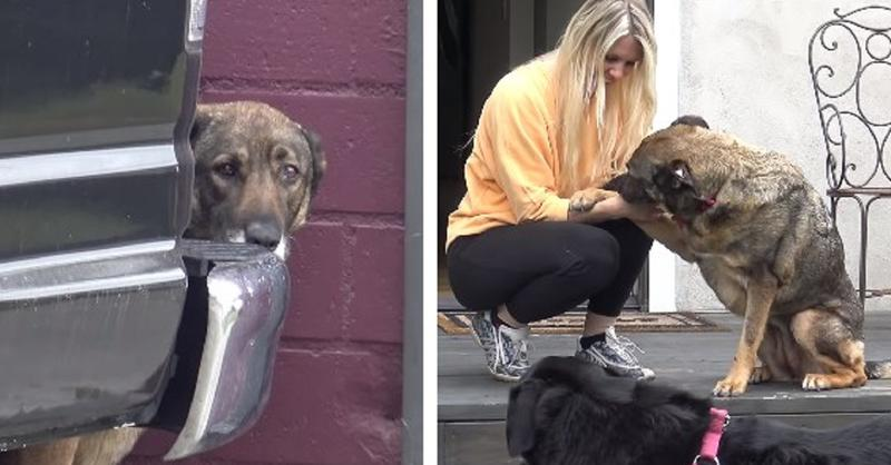 A Different Rescuer Fell In Love With Her