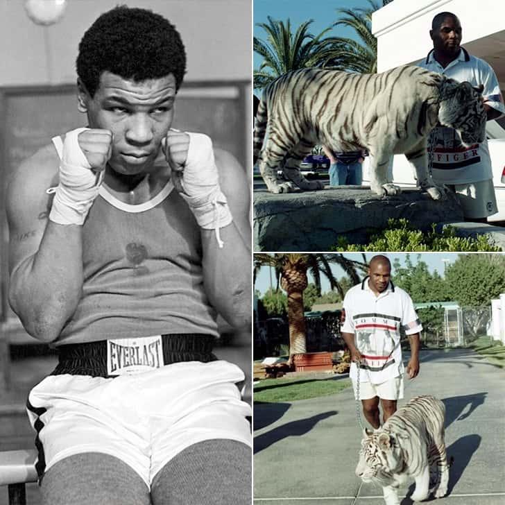 Mike Tyson – Three Tigers, $210K