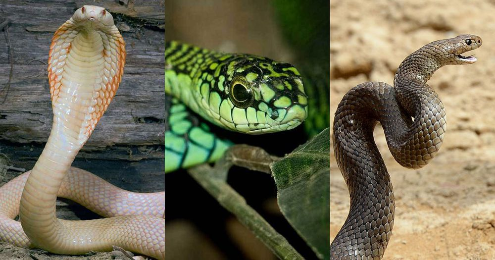 You Would Never Want To Encounter These Dangerous Snakes In Your Life