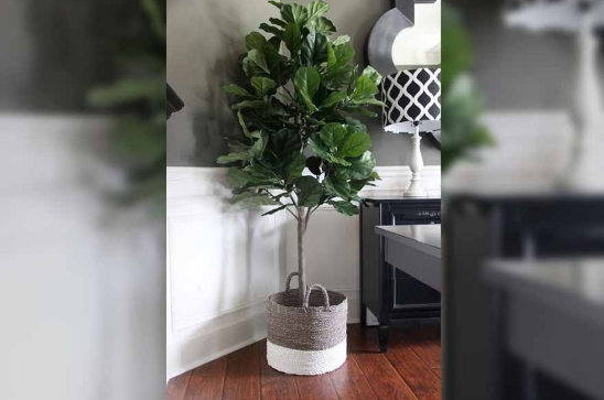 Ditch The Artificial Plants