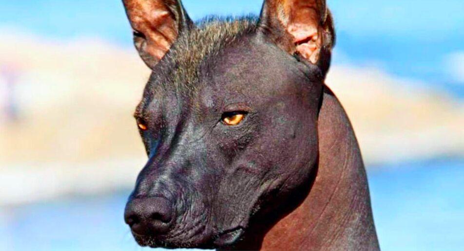 Dierenarts Ziet De Nieuwe Hond Die Deze Familie Heeft Geadopteerd En Belt  Onmiddellijk De Politie | Xfreehub