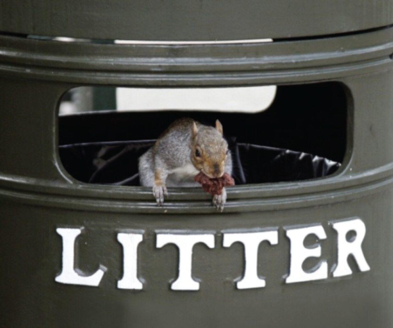 Mantenha animais longe do seu lix